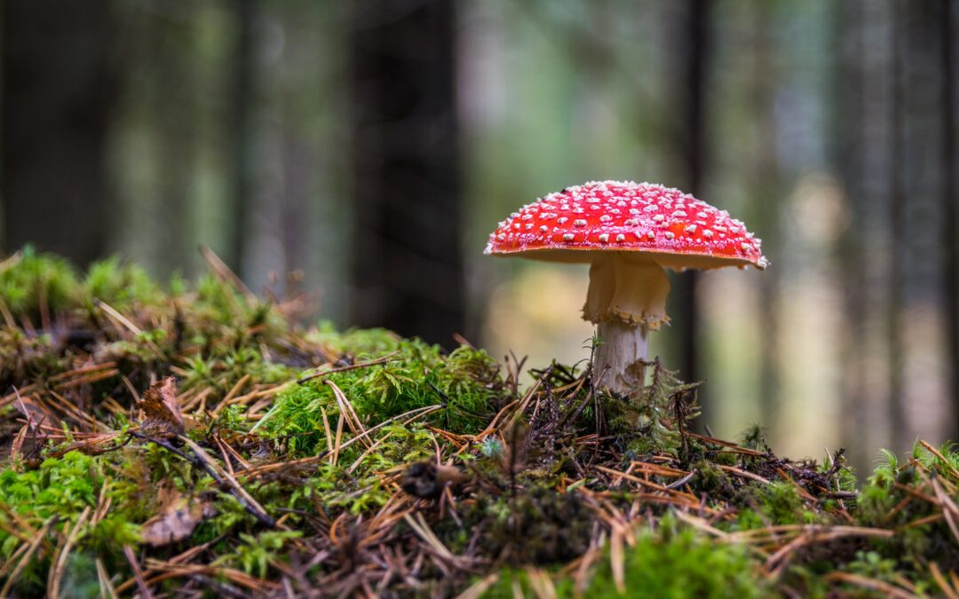 Photograph of a mushroom, which aligns with the topic of a toxic business relationship